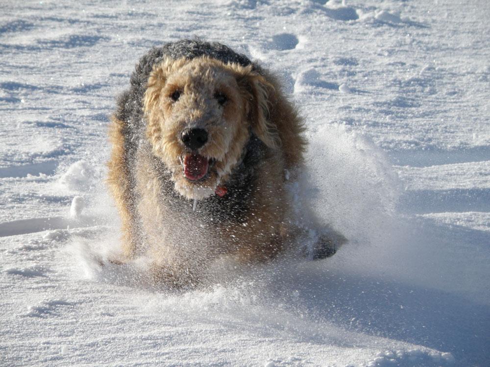 powder_hound