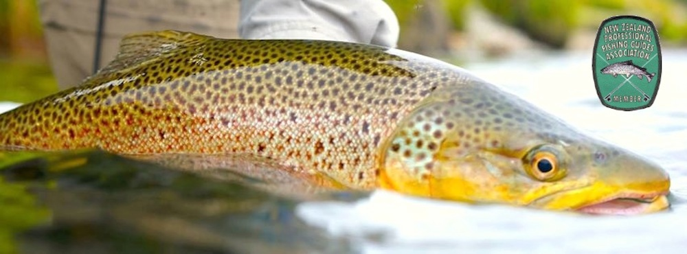 fly_fishing_guide_wanaka_queenstown_2.jpg